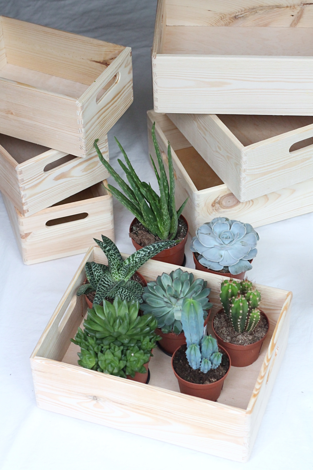 Interior Succulents Floating Bohemian_11